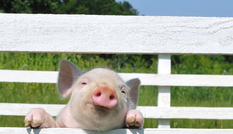 Association Restrictive Covenants and This Little Piggy
